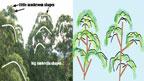 shapes of foliage